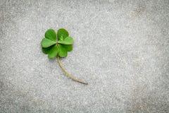 在石背景的三叶草叶子 象征性四个叶子克洛 库存图片