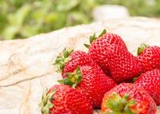 在石背景的成熟草莓 图库摄影