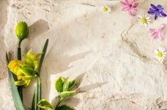 在石背景的春天花 免版税图库摄影