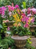 在石花瓶的兰花安排 免版税库存图片