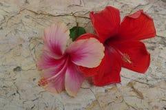 在石表面背景的桃红色和红色Chinarose花 库存图片