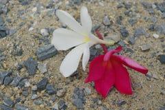 在石表面背景的白色和红色花 免版税图库摄影