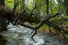 在石头中的河在谷山 库存图片