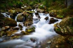 在石头和森林中的山溪 库存图片