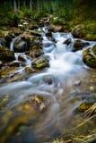 在石头和森林中的山溪 库存照片