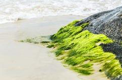 在石头困住的绿色青苔在沙子和海波浪附近 免版税库存照片