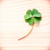在石头的三叶草叶子 象征性四片叶子三叶草fi 免版税库存照片