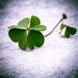 在石头的三叶草叶子 象征性四片叶子三叶草fi 图库摄影