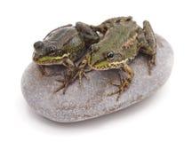 在石头的两只青蛙 库存照片