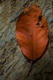 在石头的叶子 免版税库存图片