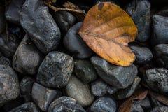 在石头的叶子 免版税图库摄影