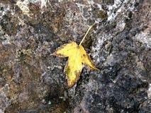 在石头的叶子 免版税库存照片