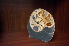 在石头的好的大装饰金壳 免版税图库摄影