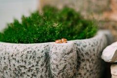 在石头的婚戒在草,在绿叶中, le 库存图片