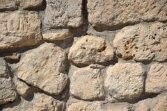 在石头的孤独的蜥蜴 库存照片