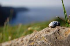 在石头的小的蜗牛壳 免版税库存照片