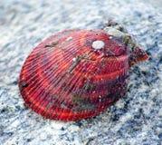在石头的扇贝壳 图库摄影