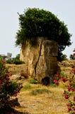 在石头的树 免版税库存照片