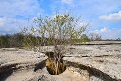在石洞的树 库存照片