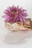 在石头的桃红色花 免版税库存图片