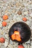 在石头的棕榈汁 免版税图库摄影