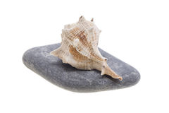 在石头的海壳 免版税库存照片