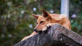 在石头的疲乏的狗 免版税库存照片