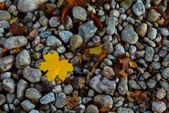 在石头的秋天叶子 库存照片