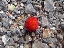 在石头的红色果子 免版税库存照片