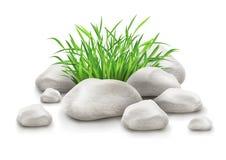 在石头的绿草作为横向设计要素 图库摄影