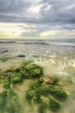 在石头的美丽的绿藻类在低潮期间的海滩浇灌 阳光和黑暗的云彩 库存照片