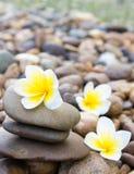 在石头的羽毛花温泉的放松,选择聚焦 免版税库存照片
