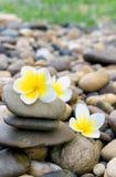 在石头的羽毛花温泉的放松 免版税图库摄影