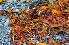 在石头的色的海草 库存图片