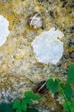 在石头的蜗牛在Devitakskoy陷下,保加利亚 免版税库存图片
