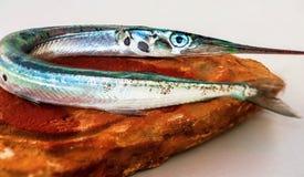 在石头的长嘴硬鳞鱼 免版税库存图片