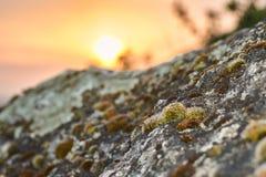 在石头的青苔 库存图片