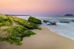 在石头的绿浪青苔 图库摄影