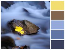 在石头的黄色叶子在有调色板颜色样片的河 免版税图库摄影