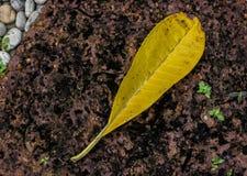 在石头的黄色叶子 免版税库存照片