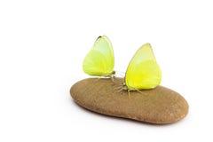 在石头的黄色butterflys有白色背景 免版税图库摄影