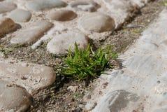 在石头的绿草 免版税库存照片