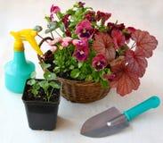 在矾根属植物、蝴蝶花和雏菊篮子的庭院构成  免版税库存照片
