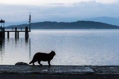 在码头的一个猫剪影 库存图片