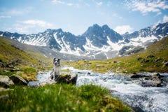 在码头的孤独的狗反对山背景和雪岩石 图库摄影