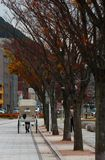 在码头附近的日本路旁推车在Mojiko,北九州, Fukuok 免版税图库摄影