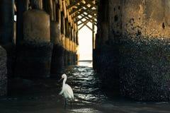 在码头下的白色鸟 免版税库存图片