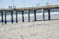 在码头前面的鸟 免版税库存照片