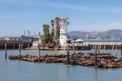 在码头39富比世海岛的封印 免版税库存图片