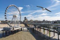 在码头结构上的海鸥飞行在斯海弗宁恩 库存照片